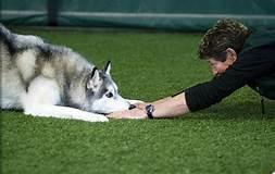 6-dog-training-commands