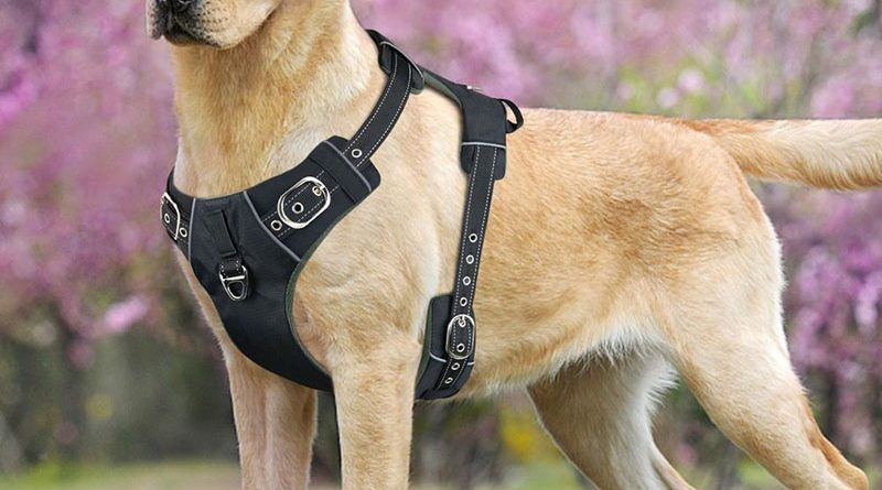 Picking The Right Dog Training Harnesses and Collars