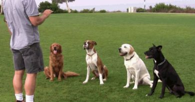Choosing the best dog training school
