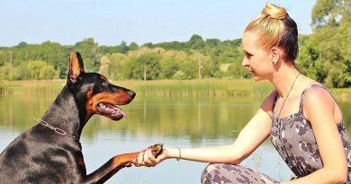 Dog Training Basic Commands