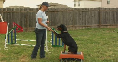 Dog training tips that work