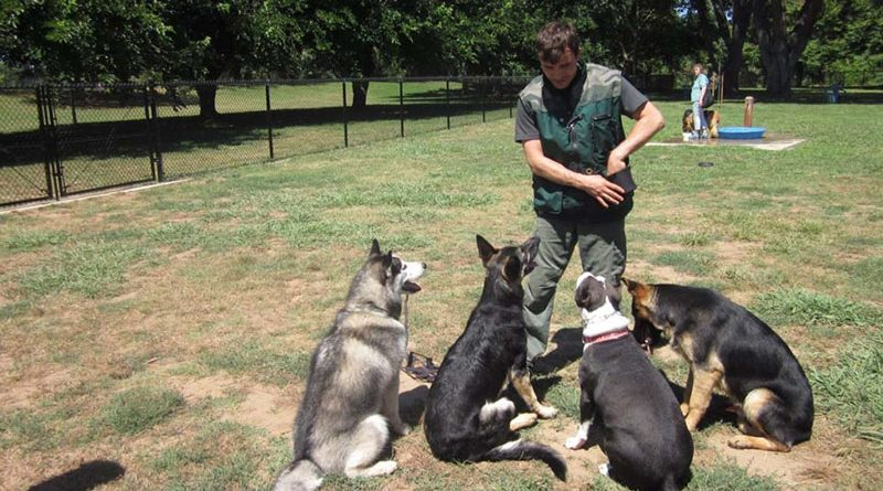 Good and bad dog training methods