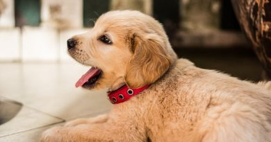 Puppy Teething Tips
