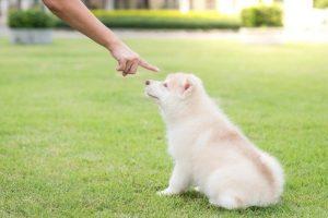 Avoid over punishing your dog