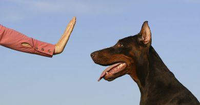 Dog Training Discipline