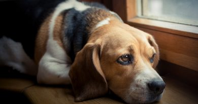 How-to-Deal-With-Separation-Anxiety-in-Dogs