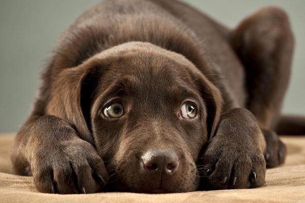 Should you change your dog's name?