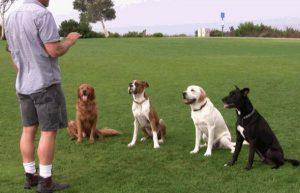 Choosing the best dog training school