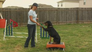 Dog training tips that work