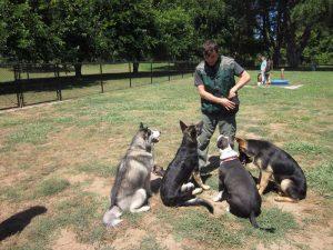 Good and bad dog training methods