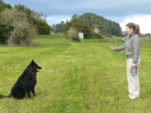 Dog Training Obedience