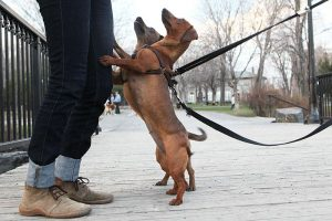 How to stop your dog from jumping