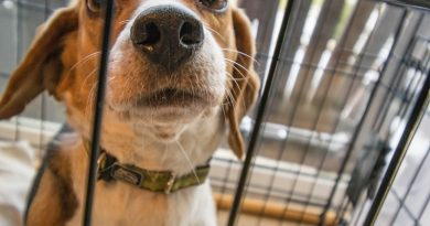 Basic crate training for your puppy