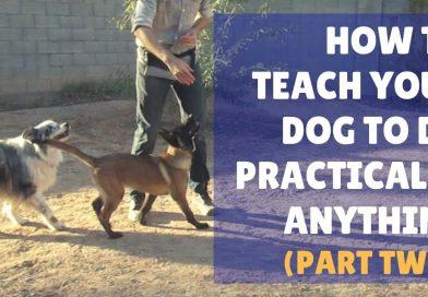 Dog Training 101 Ep 2: Lure/Reward