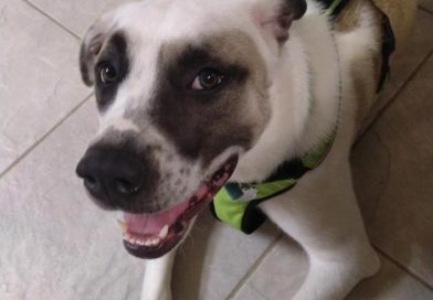 Gulf Coast Tiny Paws Rescue pet of the week | Lifestyle