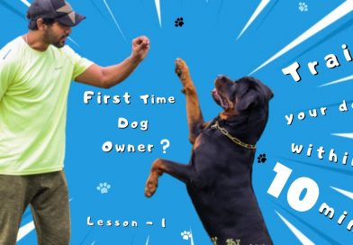 How to Train Your Dogs Basic Obedience in 10 mins | Dog Training Lesson 1 | Chatty Rotty [IN TAMIL]