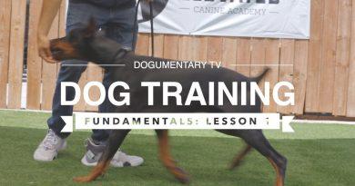 DOG TRAINING FUNDAMENTALS: LESSON 3 LURING