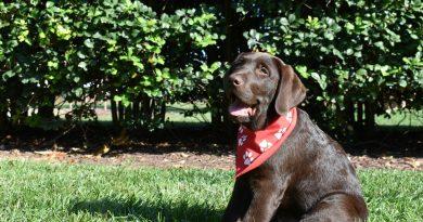 Meet Teddy the Terp, U.Md. College Park's new comfort dog